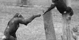 Frans de Waal on the Evolution of Morality