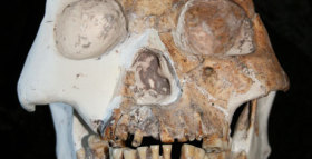 A New Species of Hominid?