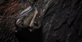 Do Wild Bats Hold the Key to Understanding Human Tribal Behavior?
