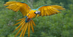 DNA Sequenced for Parrots' Ability to Parrot