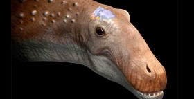 Bigger Isn't Necessarily Smarter: An Enormous Dino With a Tiny Brain