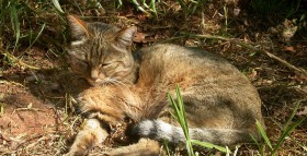 Cats Killing Billions of Animals In The US
