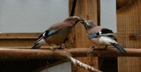 Monogamous Birds Read Partner's Food Desires
