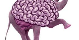 Surprising Brain Differences Between Republicans and Democrats