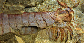 Intricately Preserved Fossil Is Helping Scientists Paint a Picture of Early Arthropod Evolution