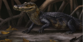 Ancient Caimans Help Place Panama
