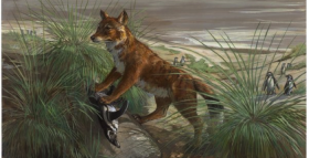 How Did This Extinct Wolf Come to Inhabit Islands?