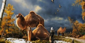 Camels Were Not Originally Desert Animals