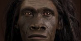 Did Homo Erectus Give Us Wisdom Teeth?