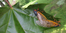 mating_pair