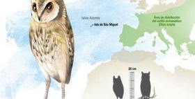 New Species of Extinct Owl Found in Azores Islands