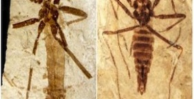 Prehistoric Flea Provides Connection Between Earliest and Modern Species