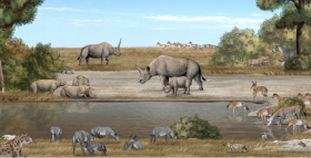 New Fossil Gives Context to Ancient Unicorn Rhino