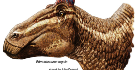 Duck-Billed Dinosaur Strutted Like a Rooster