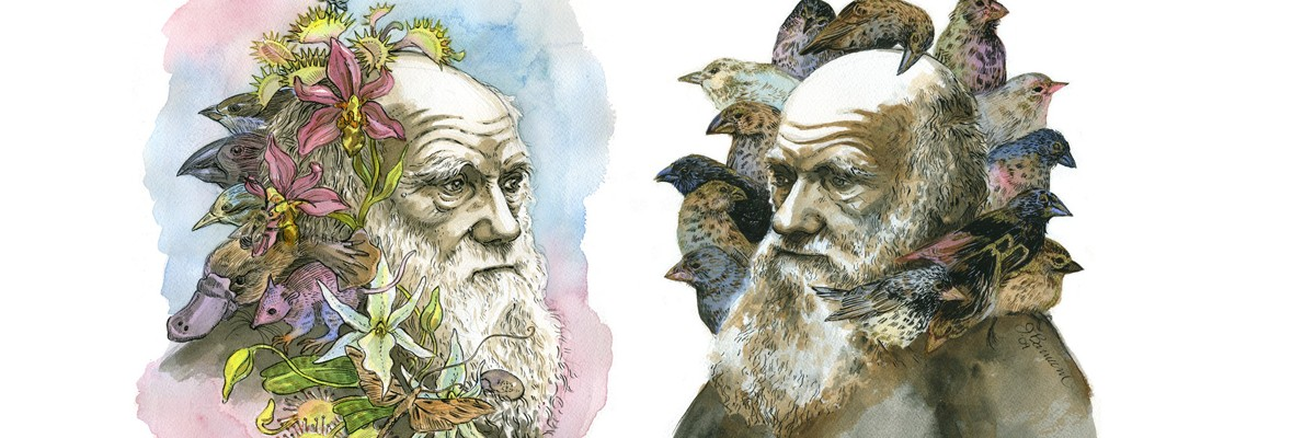 Topic ideas for a Darwin Day essay contest?